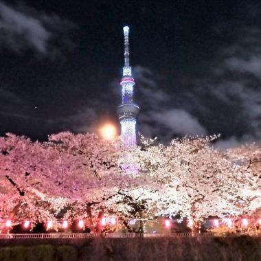 4月 お花見クルーズ【開催中止】